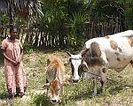 Naše-kráva-mléko-dává_new